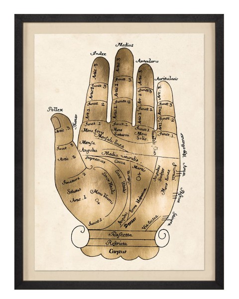 NATURAL CURIOSITIES GALLICUS HAND 1,GOLD LEAF, Frame WITH FRAME