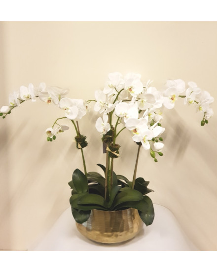 PO5.GLD-WH Phalaenopsis orchid, 5 stems, in gold bowl